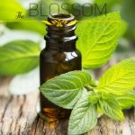 Peppertmint Arvensis Essential Oil